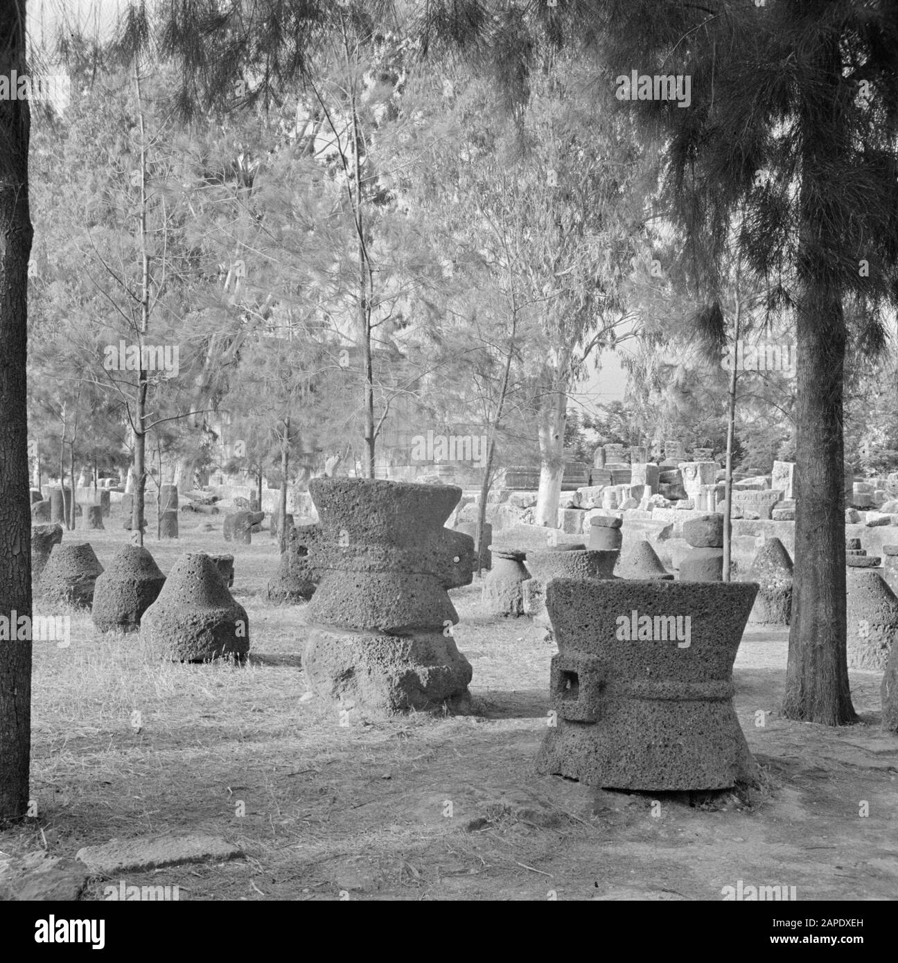 Israel 1948-1949:Galilee Description: Archaeological finds - including wine presses and architectural fragments - exhibited in Kapernaum on the shore of Lake Genesareth/Tiberias Date: 1948 Location: Israel, Capernaum, Tiberias Keywords: archeology, trees, history, landscapes, exhibitions, viticulture Stock Photo