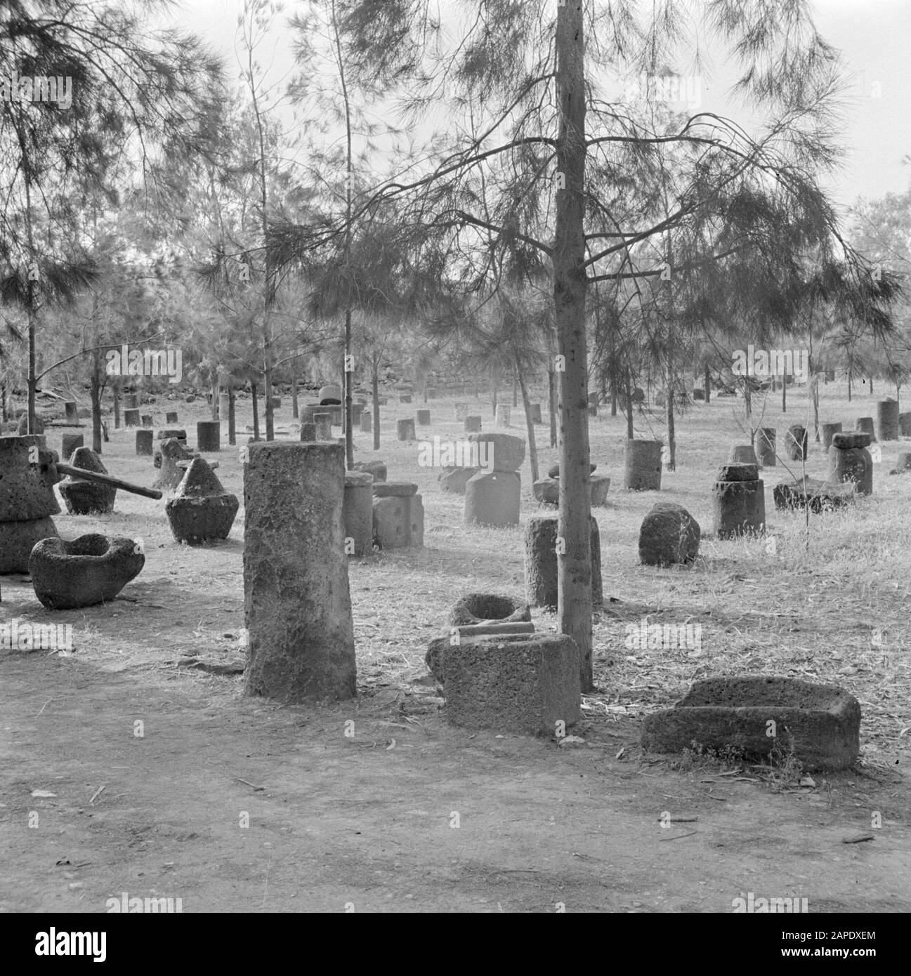 Israel 1948-1949:Galilee Description: Archaeological finds - including wine presses and architectural fragments - exhibited in Kapernaum on the shore of Lake Genesareth/Tiberias Date: 1948 Location: Israel, Capernaum, Tiberias Keywords: archeology, history, landscapes, exhibitions, viticulture, columns Stock Photo