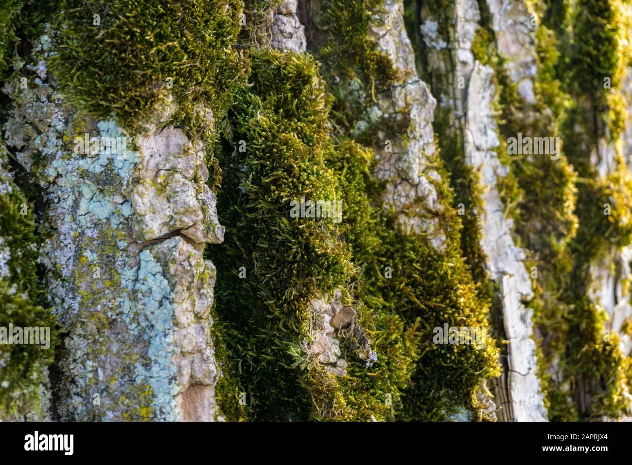 background bark ash Stock Photo