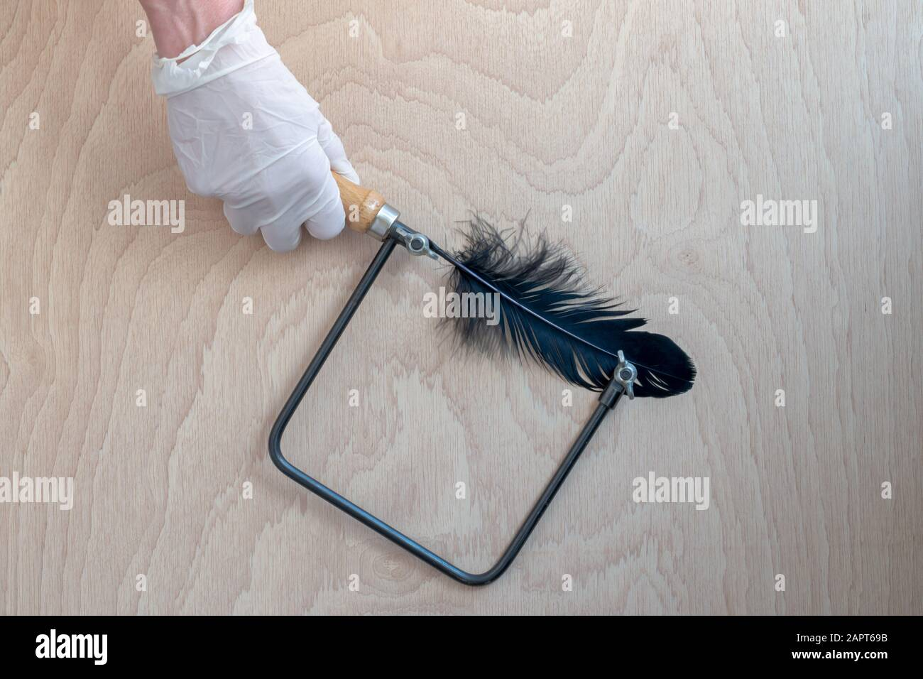 Non violent abuse. Hand with glove holding a hand saw that has a black feather by saw. Stock Photo