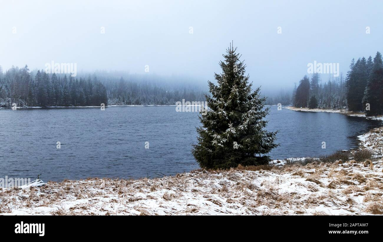 Oder pond in the Harz Mountains with a single tree Stock Photo