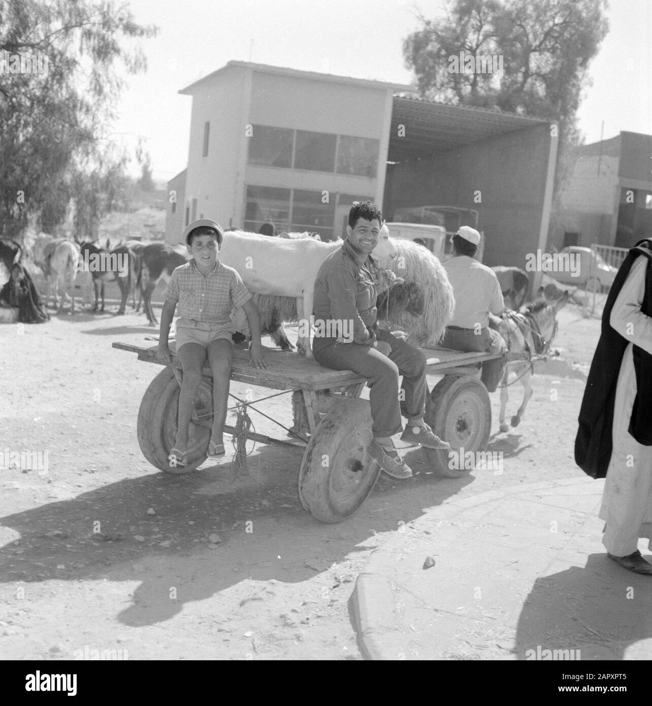 Israel 1960-1965: Bedouins in Beershewa (Beer Sheva)  Two adult men, a child, a sheep and a goat on a weft on pneumatic tires pulled by a donkey on the market of Beersjeba. In the background some donkeys and mules Date: January 1, 1960 Location: Bersheba, Israel Keywords: donkeys, goats, trade, carts, children, markets, sheep, street images, transport Stock Photo