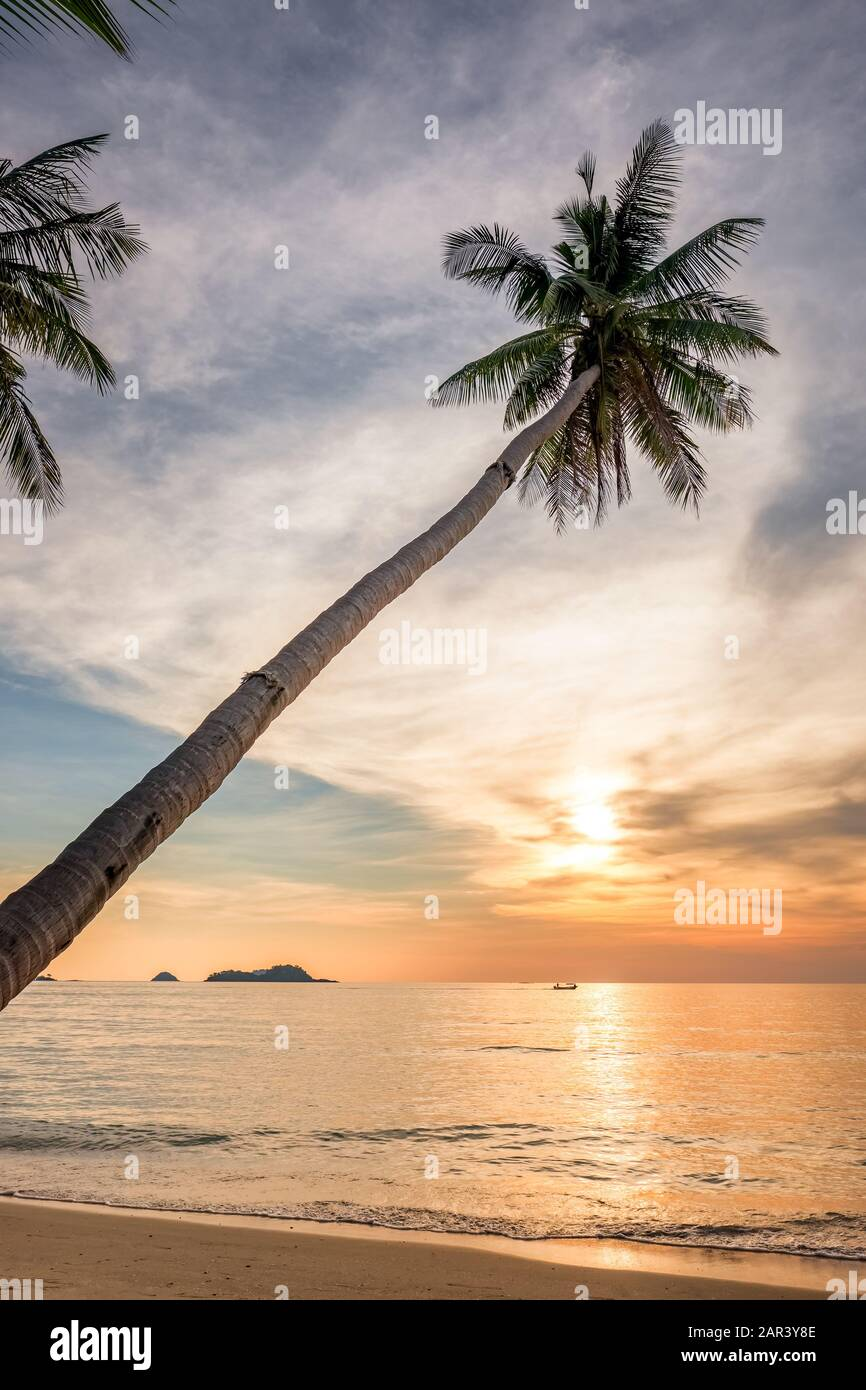 Palm tree on an empty tropical beach at sunset Stock Photo