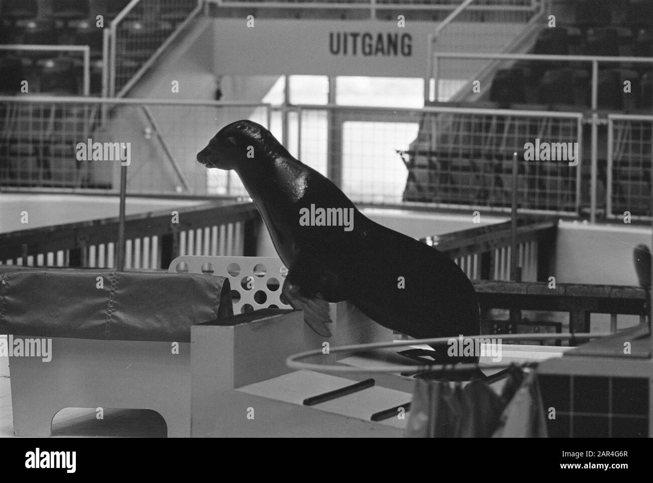 Dolfinarium, Harderwijk; lots of dolphins audience Date: June 11, 1970 Location: Harderwijk Keywords: DOLFINARIUM Stock Photo