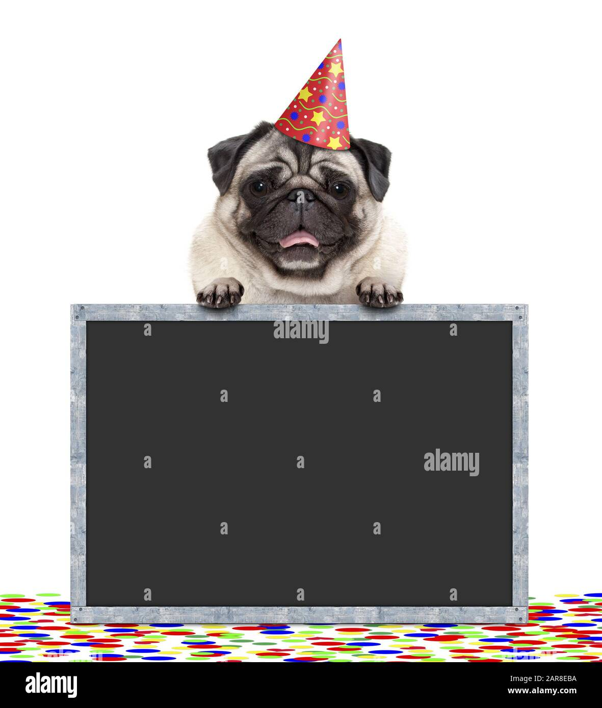 frolic smiling birthday party pug dog with hat and confetti and paws on blackboard sign, isolated on white background Stock Photo