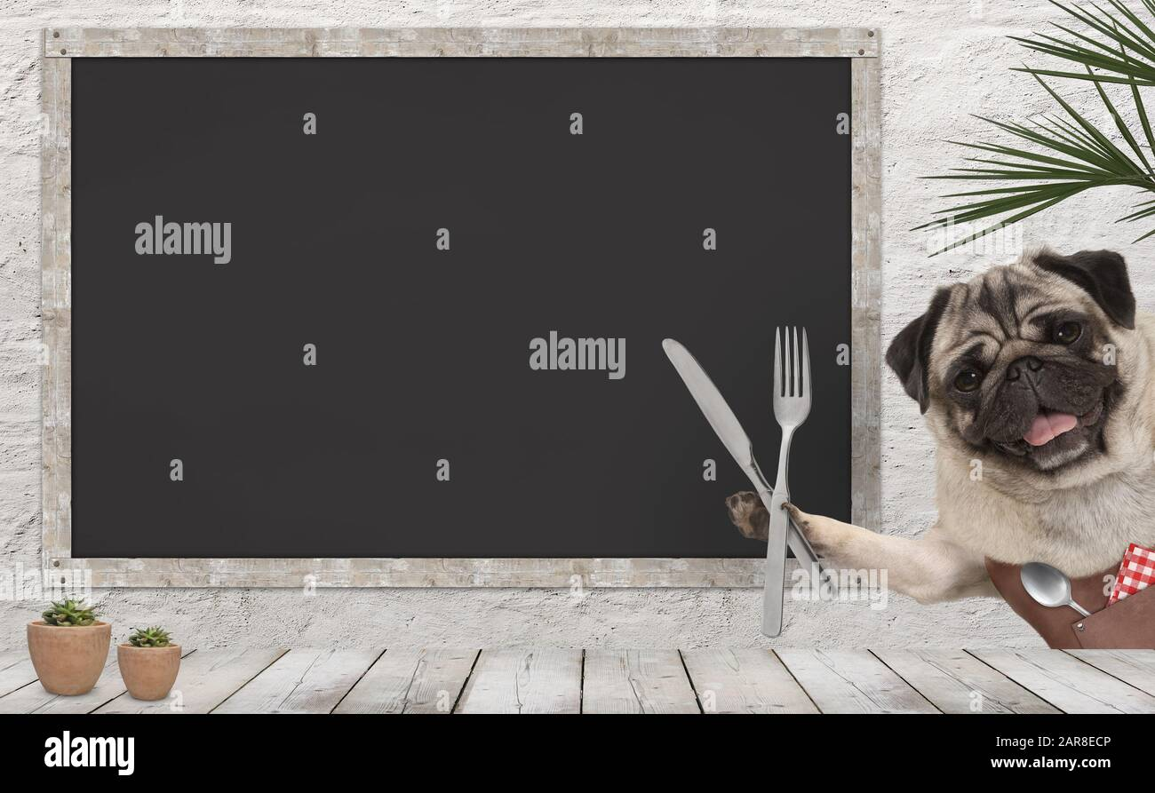 frolic pug puppy dog with leather apron and cutlery in diner, with blank menu board and wooden counter Stock Photo