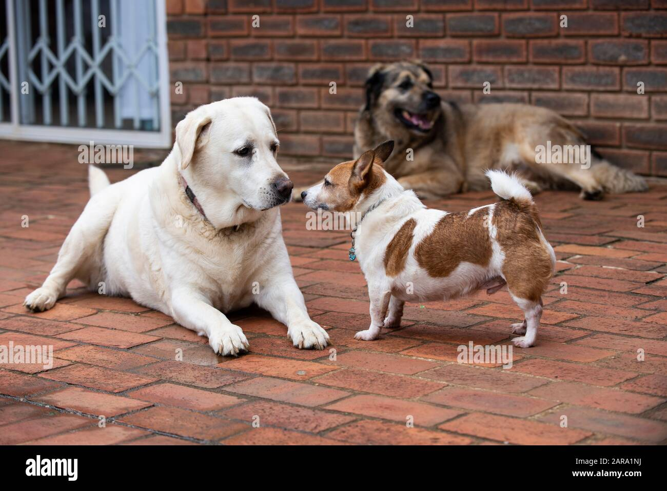 Variety of dogs in one shot, Westville, South Africa Stock Photo