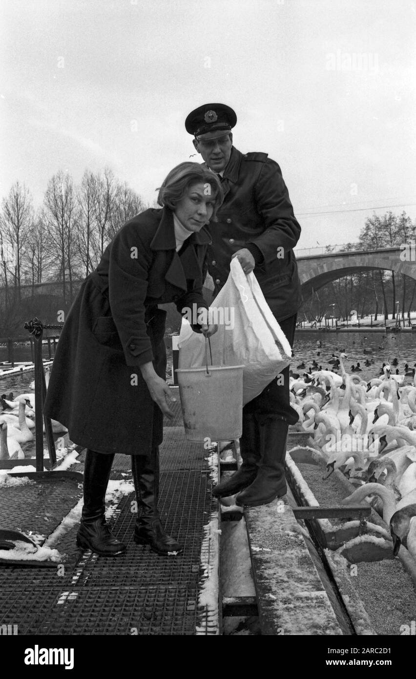 "Der Schwanenvater Harald Niess kümmert sich um die Alsterschwäne in Hamburg, Deutschland 1970er Jahre. Stockman Harald Niess, called ""Schwanenvater"" feeding and taking care for the swans of Alster in Hamburg, Germany 1970s. Stock Photo"