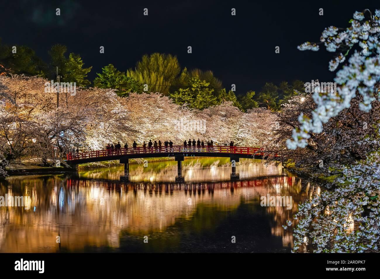 Hirosaki park cherry blossom matsuri festival light up at night. Beauty full bloom pink flowers in west moat Shunyo-bashi Bridge and lights illuminate Stock Photo