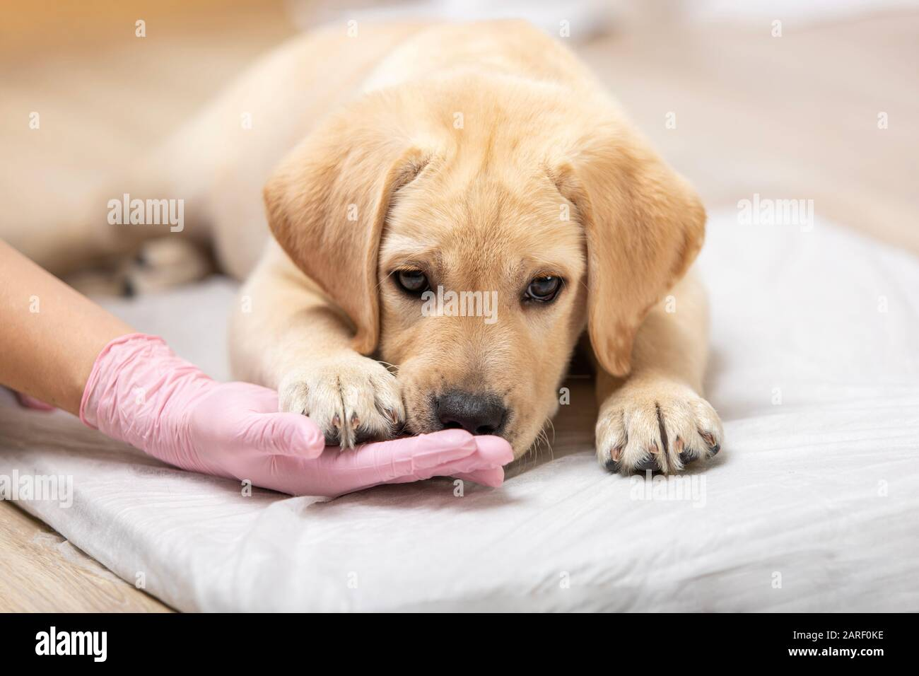 Puppy Love Dog Groomer High Resolution Stock Photography And Images Alamy