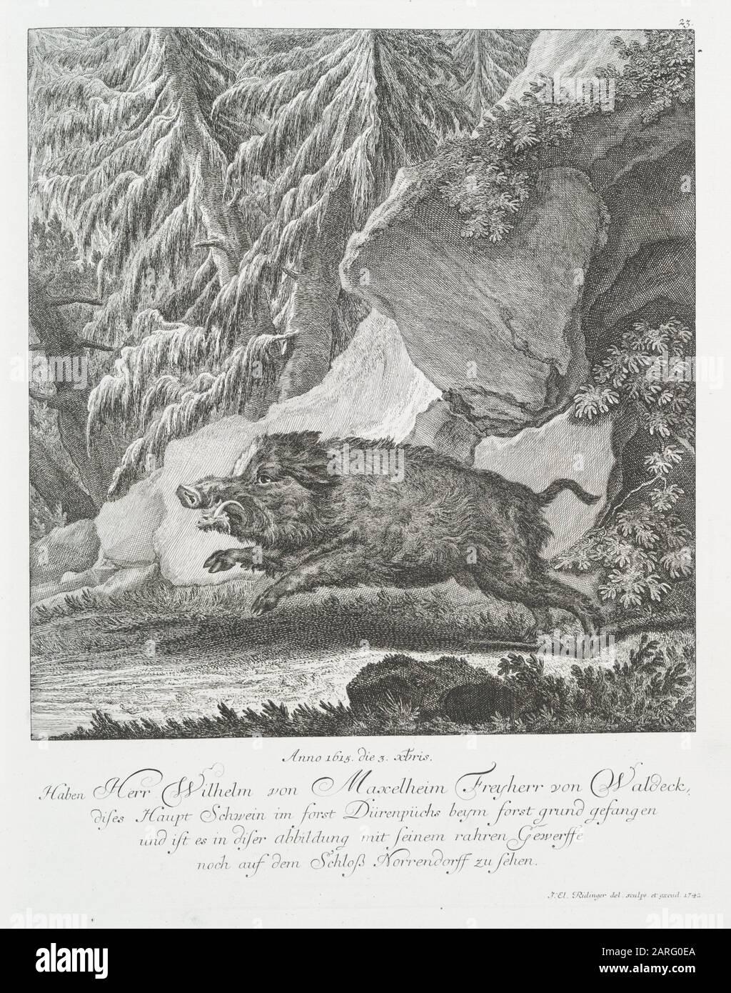 Anno 1615, the 3 xbris. Have caught Mr. Wilhelm von Maxelheim Freyherr von Waldeck, his main pig in the forest of Dürenpüchs near Forstsgrund, and Stock Photo