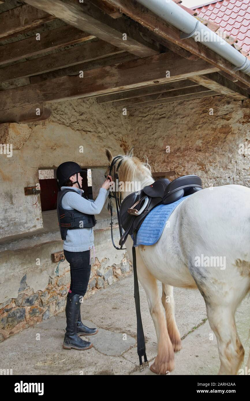 A young woman tacking up her horse in a stable yard ready for riding out. Scotland, UK, GB. Stock Photo