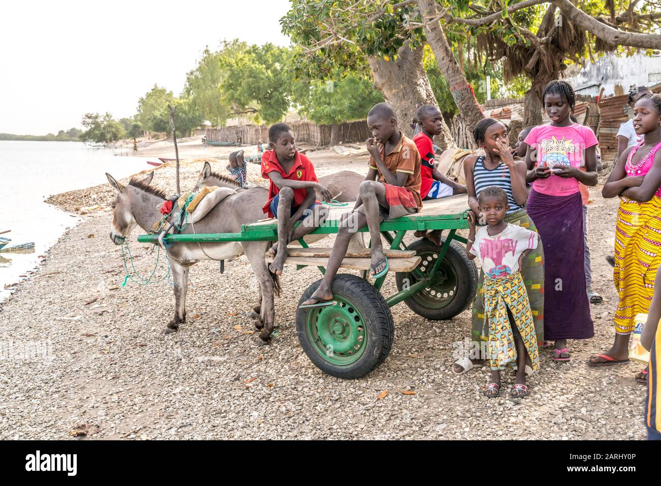 Kinder mit Eselskarren am Flussufer,  Insel Jinack Island, Gambia, Westafrika  |  children with donkey cart at the rivwer shore on Jinack Island, Gamb Stock Photo
