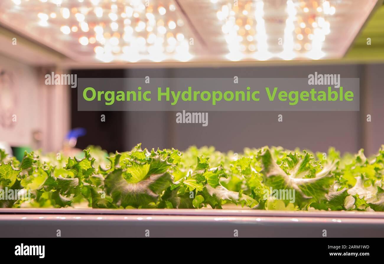 Organic hydroponic vegetable cultivation farm Stock Photo