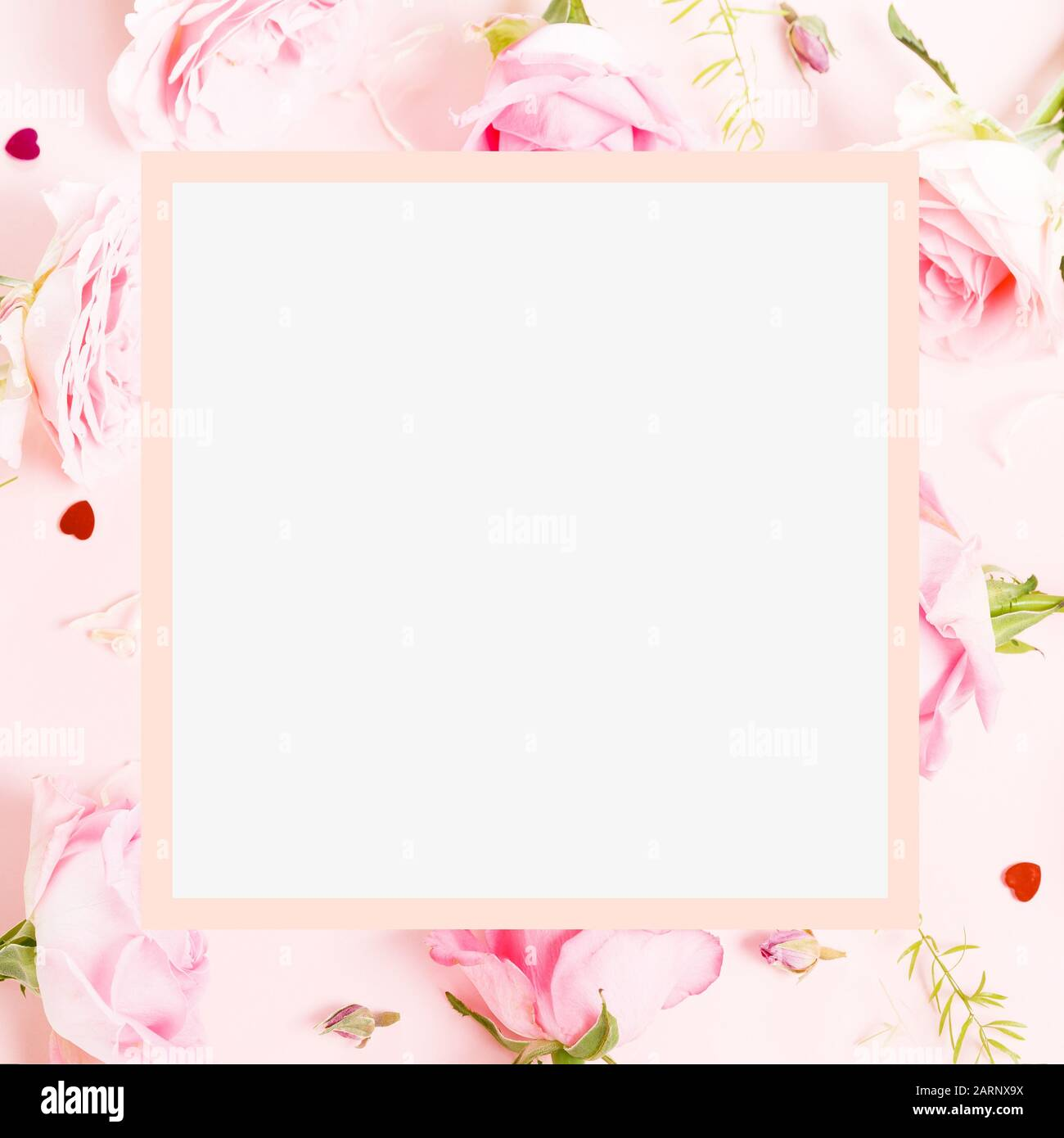 Festive flower English rose composition,frame. Overhead top view, flat lay. Copy space. Birthday, Mother's, Valentines, Women's, Wedding Day concept. Stock Photo
