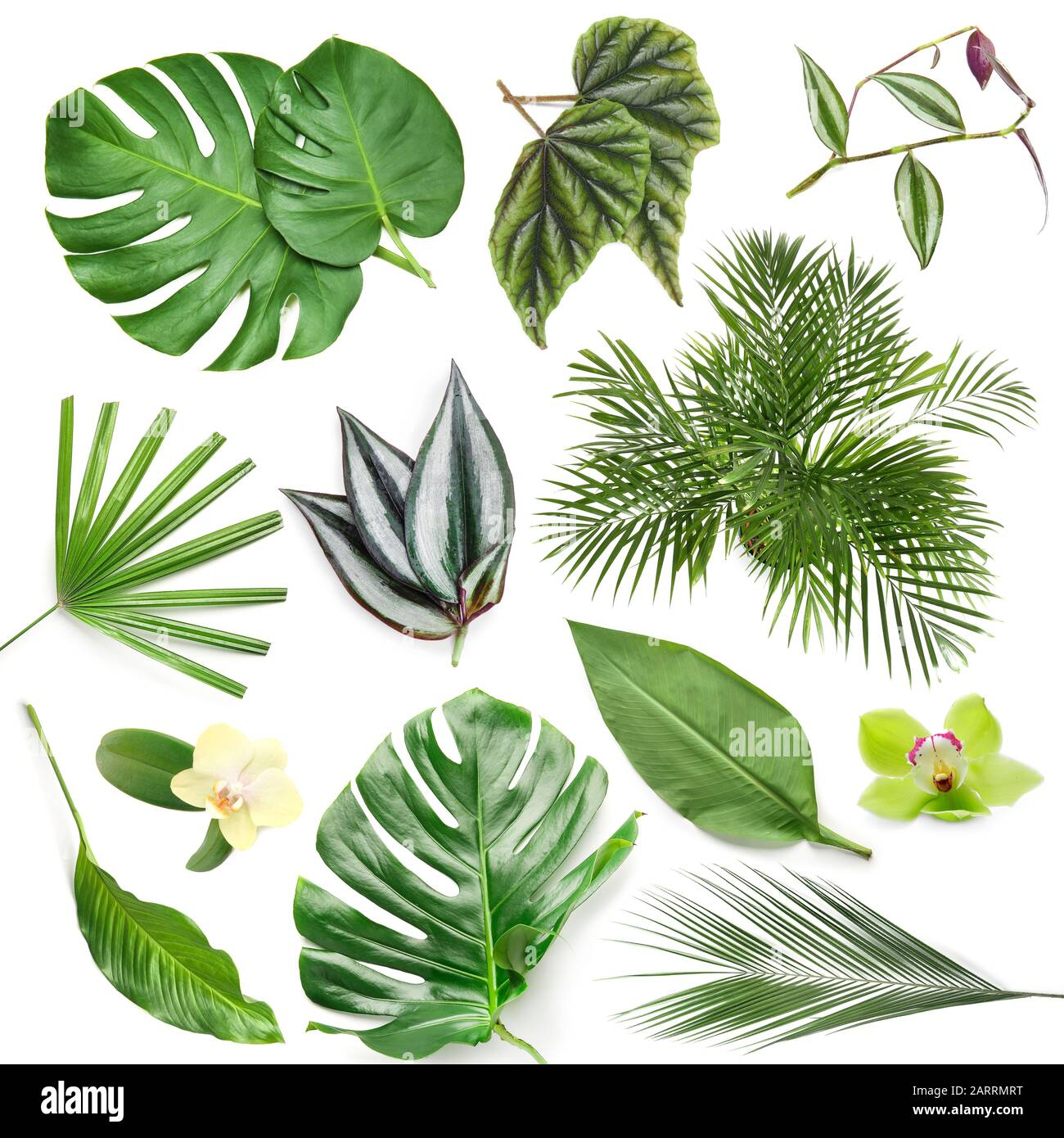 Set Of Green Tropical Leaves On White Background Stock Photo Alamy Vector tropical background with palm leaves, jungle plants and white frame. https www alamy com set of green tropical leaves on white background image341655324 html