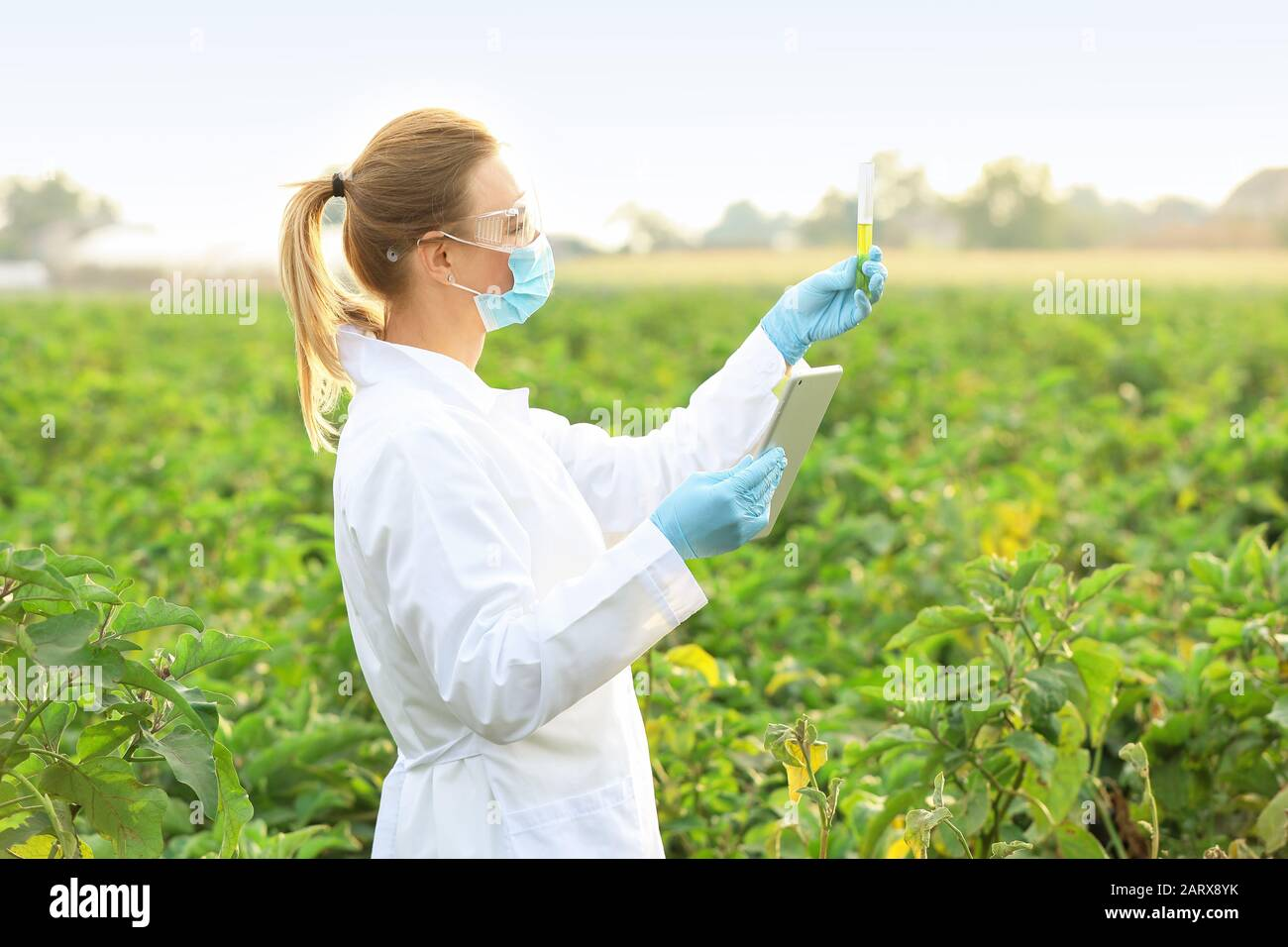 Female agricultural engineer working in field Stock Photo - Alamy