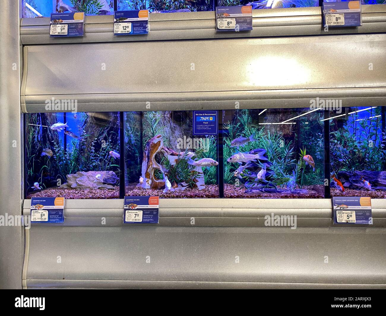 Orlando Fl Usa 1 28 20 Koi And Goldfish In An Aquarium For Sale At A Petsmart Pet Superstore Stock Photo Alamy