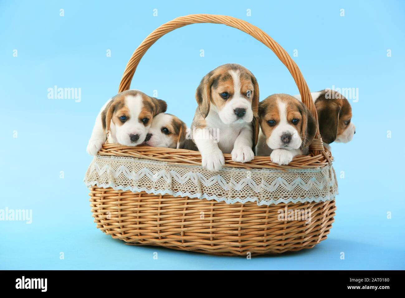 Cute Beagle Puppies In Basket On Color Background Stock Photo Alamy