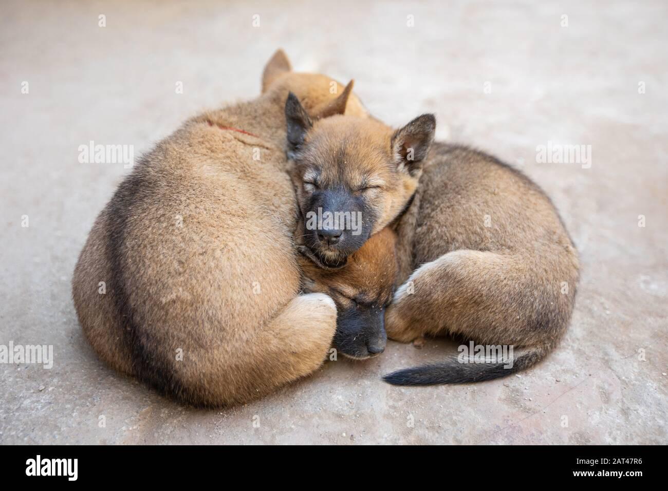 Cute Dog Puppies Sleeping On The Street Stock Photo Alamy