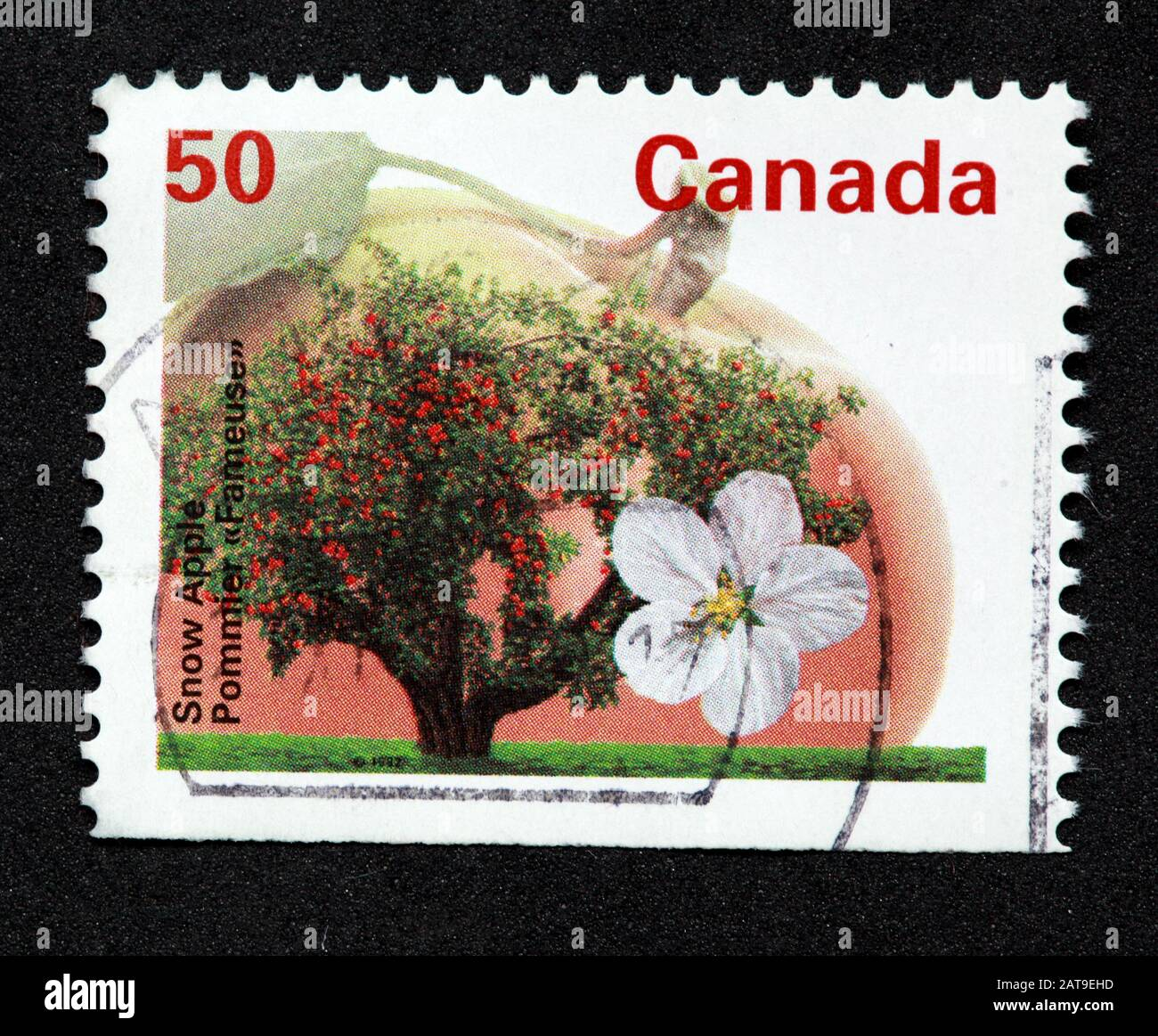 Canadian Stamp, Canada Stamp, Canada Post,used stamp, Canada 50c,50cent,, Snow Apple,flower,tree Stock Photo