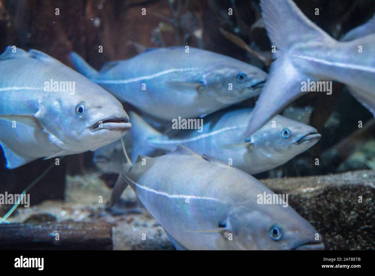 Different Kinds Of Fish From South America And The North Sea Stock Photo Alamy