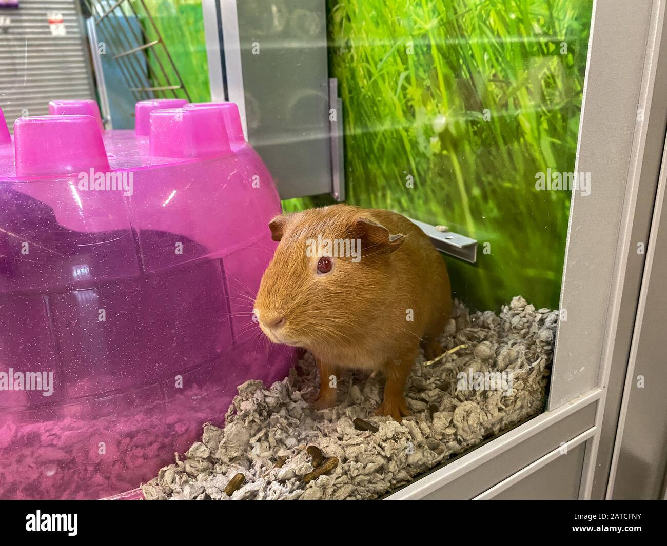 Pet Superstore High Resolution Stock Photography and Images - Alamy