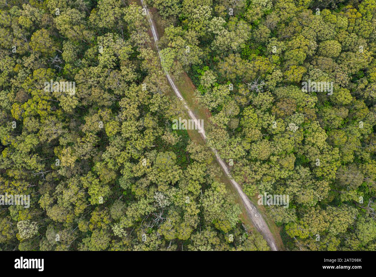 Aerial view of a road through forest, Great Otway National Park, Victoria, Australia Stock Photo
