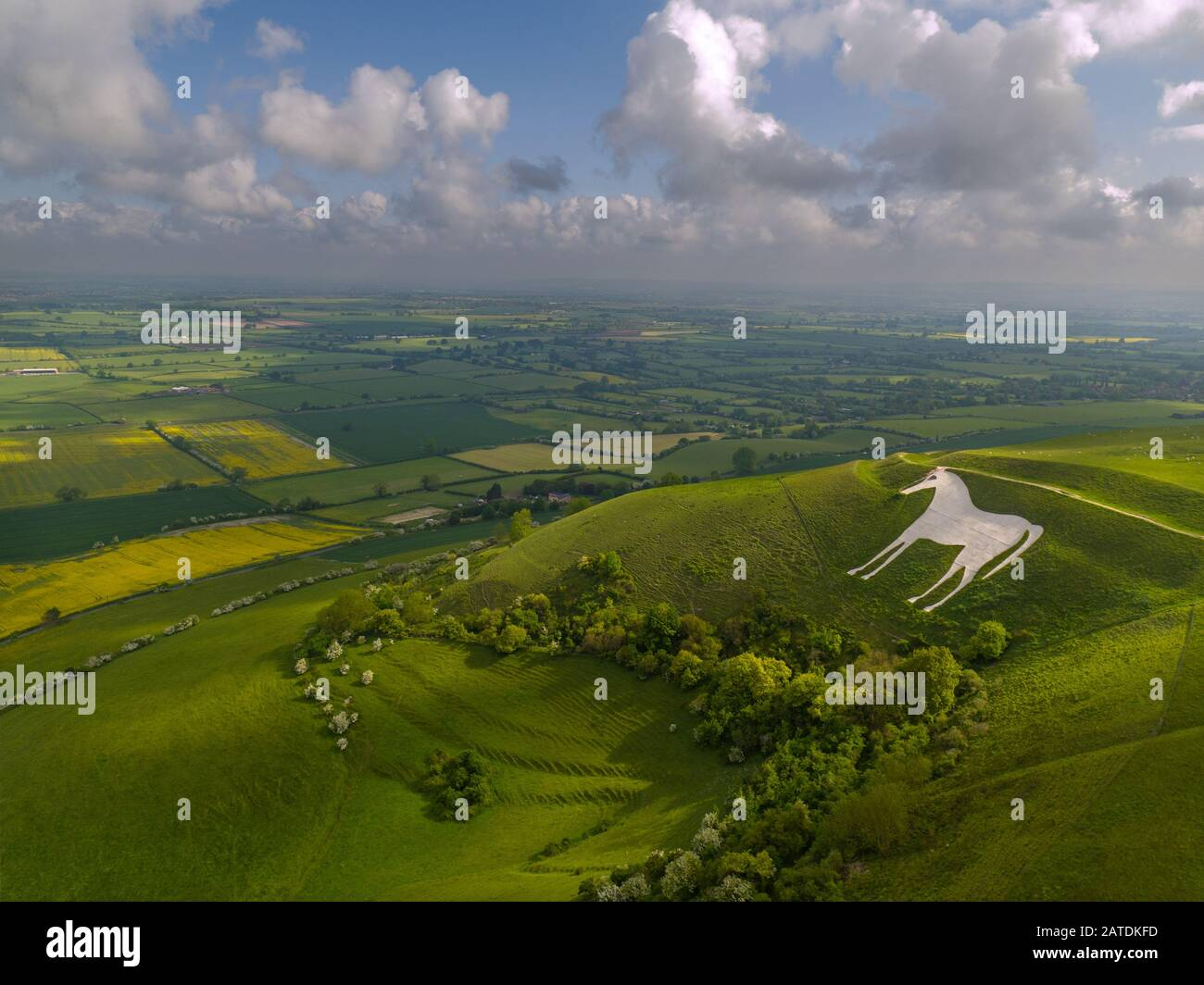 An aerial image of the historic Westbury White Horse in Wiltshire. Picture taken from a drone. Stock Photo