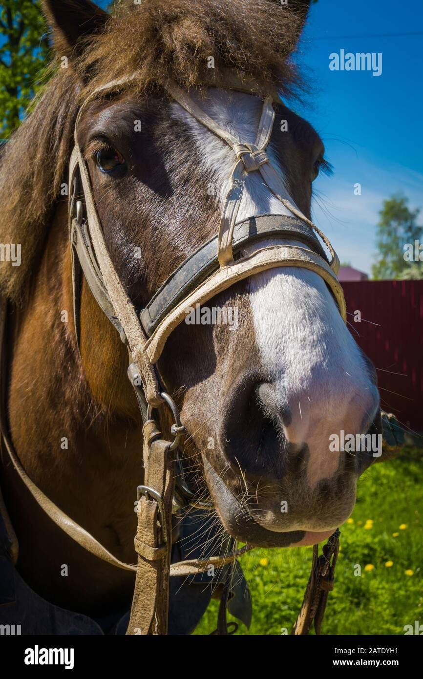 Cute Young Horse In Harness Close Up Portrait On A Sunny Day Stock Photo Alamy