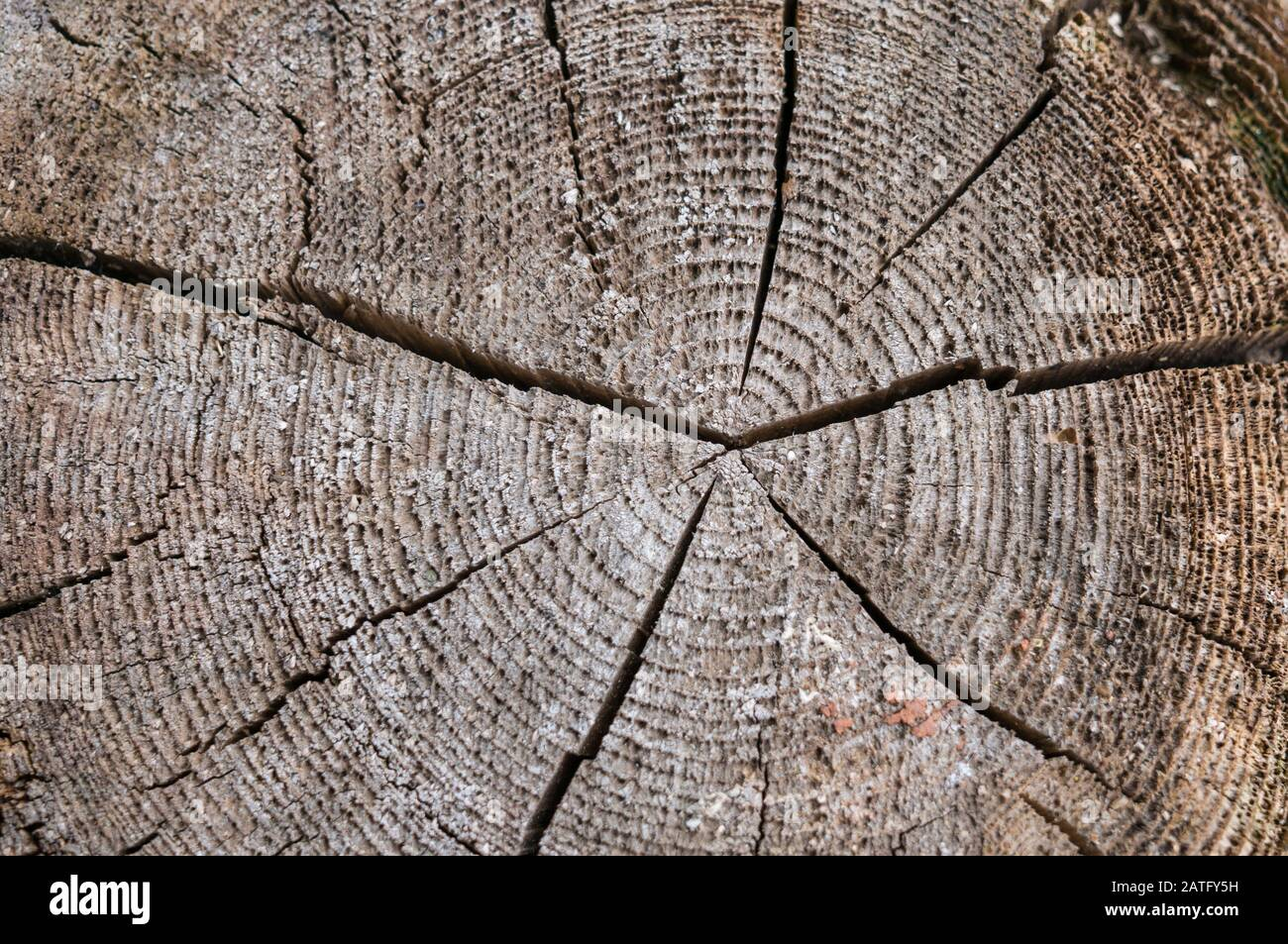 A slice of an old tree with concentric annual rings and a crack in the center. The texture of the old tree. Stock Photo