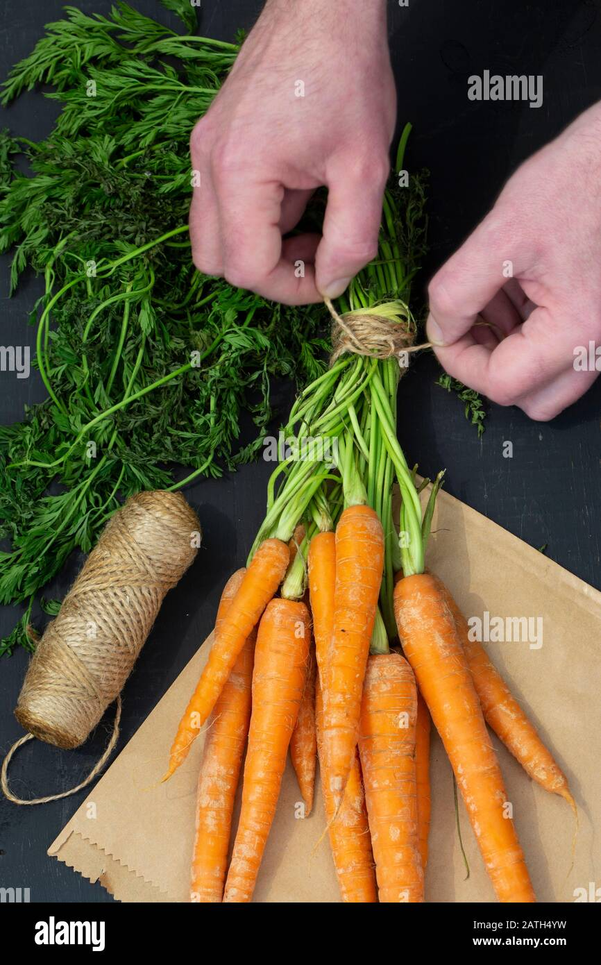 Man tying a bundle of carrots with garden string on a brown paper bag.  Black wood background Stock Photo
