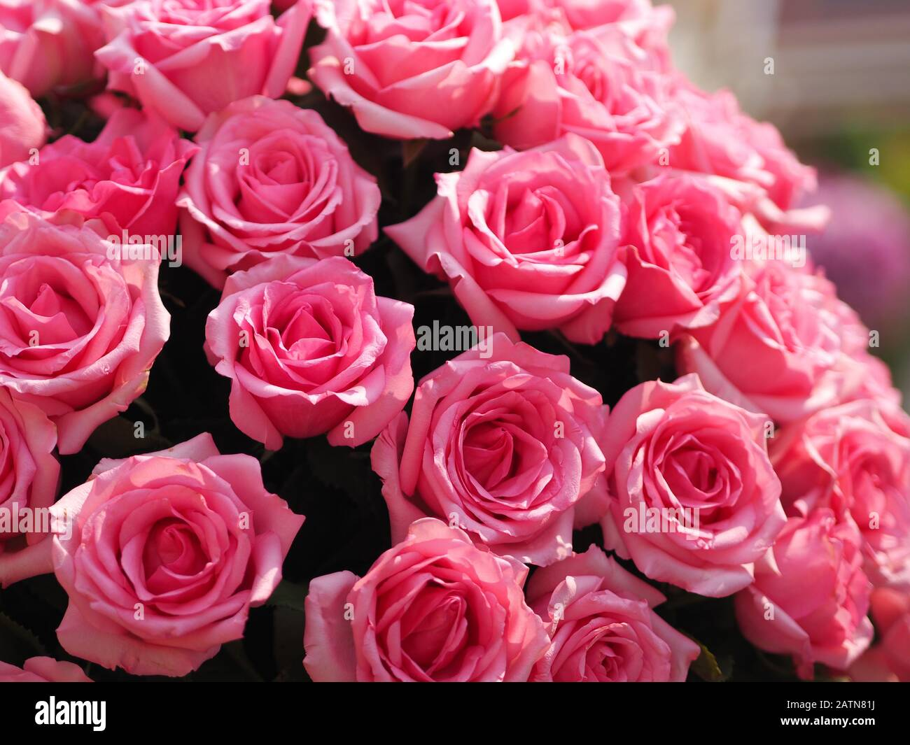 Pink Rose Flower Arrangement Beautiful Bouquet On Blurred Of Nature Background Symbol Love Valentine Day Beautiful In Nature Stock Photo Alamy