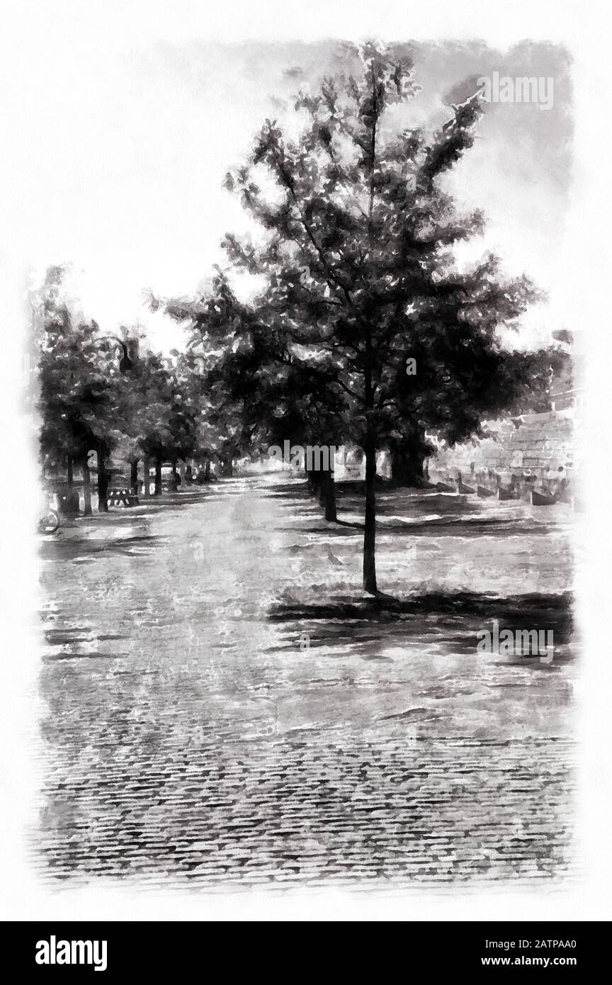 Tree on the Sidewalk Photograph with Watercolor styledigital painting. Stock Photo