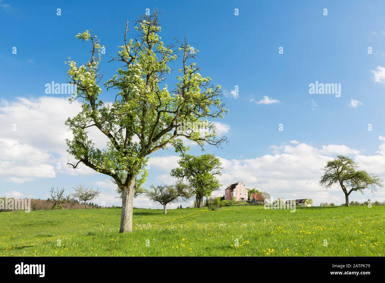 Spring on the Bodanrueck with Freudental Castle, Allensbach, Baden-Wuerttemberg, Germany Stock Photo