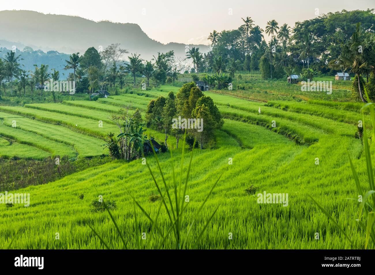 Sunrise at Sideman Rice Terraces; Bali, Indonesia Stock Photo