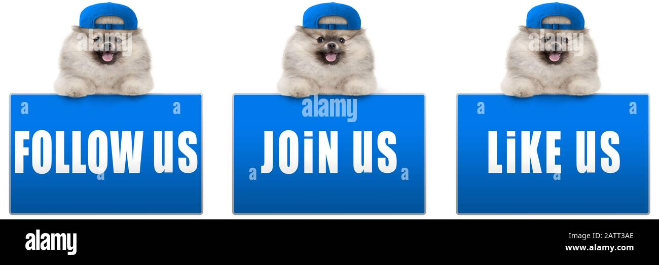 cute pomeranian dog with blue cap, leaning with paws on blue social media sign with text follow us, like us and join us, isolated on white background, Stock Photo