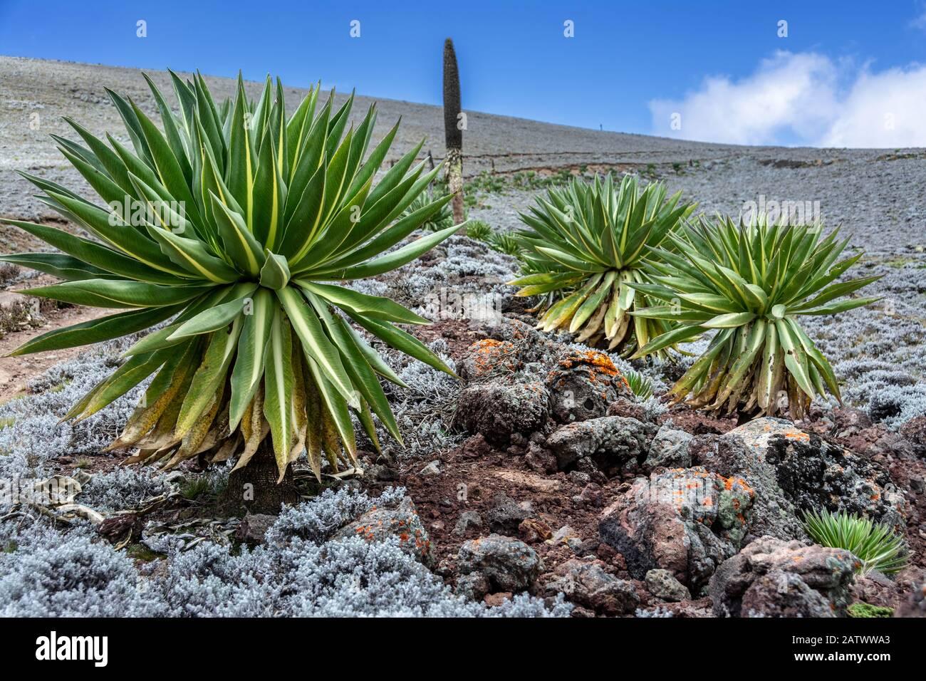 ethiopia bale mountains nationalpark Stock Photo