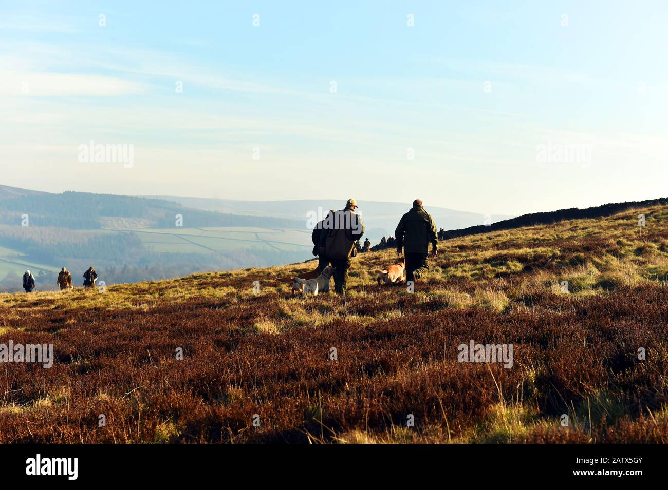 Gun dogs training session Barden Moor Yorkshire Dales UK Stock Photo