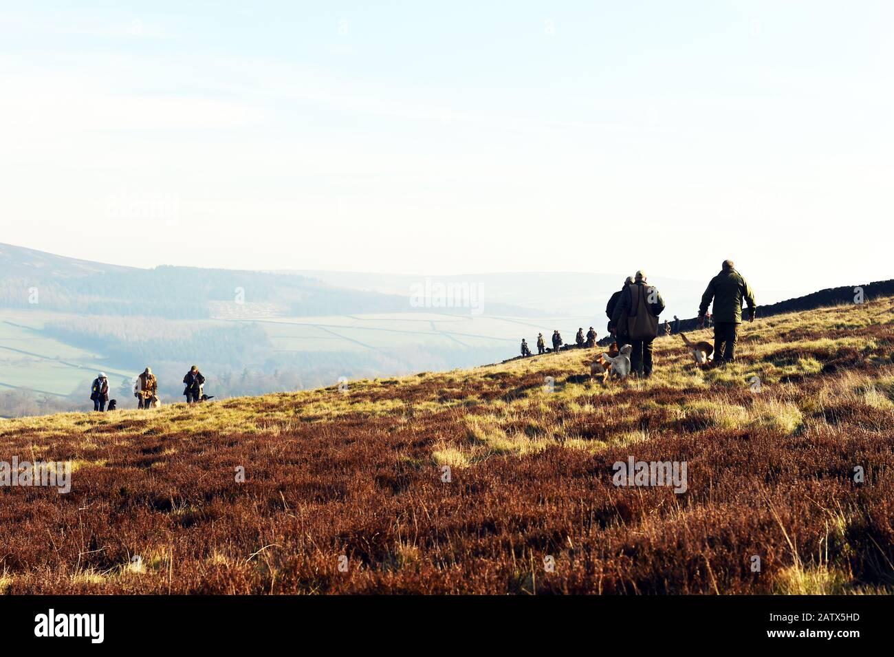 Gun dogs training session Barden Moor Yorkshire Dales UK Stock Photo
