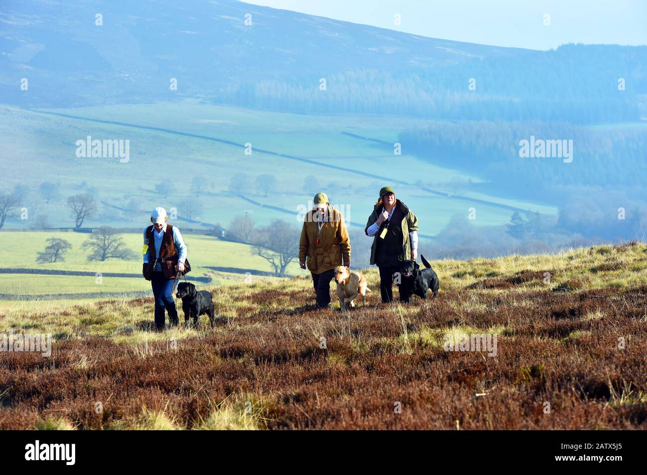 Gun dogs training session Barden Moor Yorkshire Dales UK three woman walk across the moor with their dogs Stock Photo