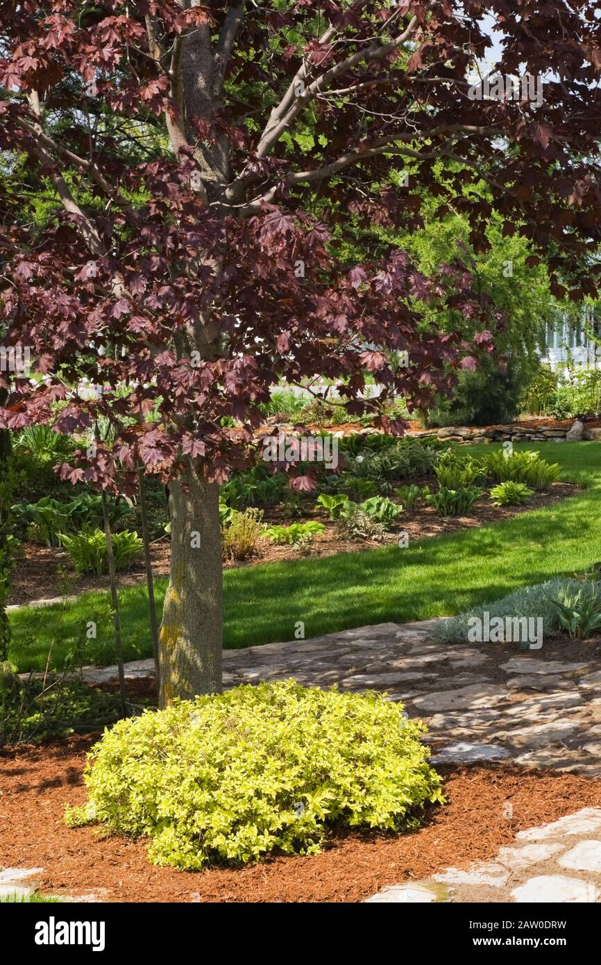 Flagstone Paths And Borders With Spiraea Japonica Gold Mound