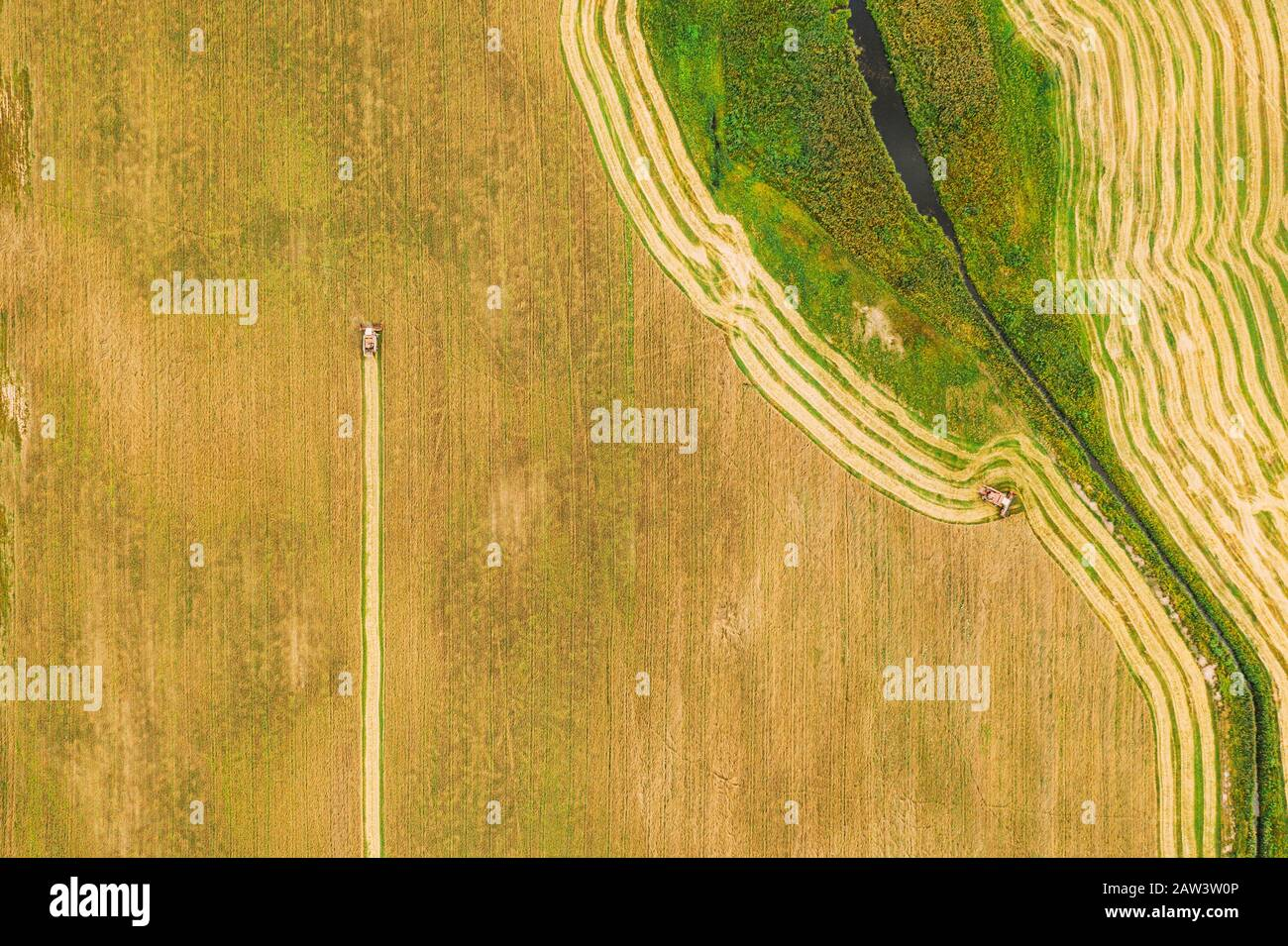 Aerial View Of Rural Landscape. Combine Harvester Working In Field, Collects Seeds. Harvesting Of Wheat In Late Summer. Agricultural Machine Collectin Stock Photo