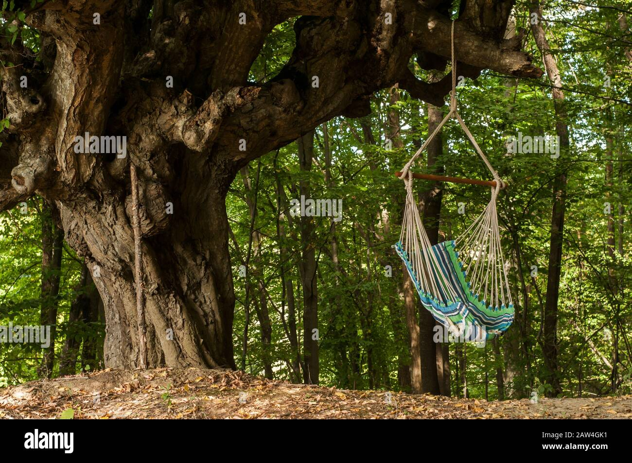 Hammock Hanging Swing Cradle Chair Hung On Old Big Tree Branch Stock Photo Alamy