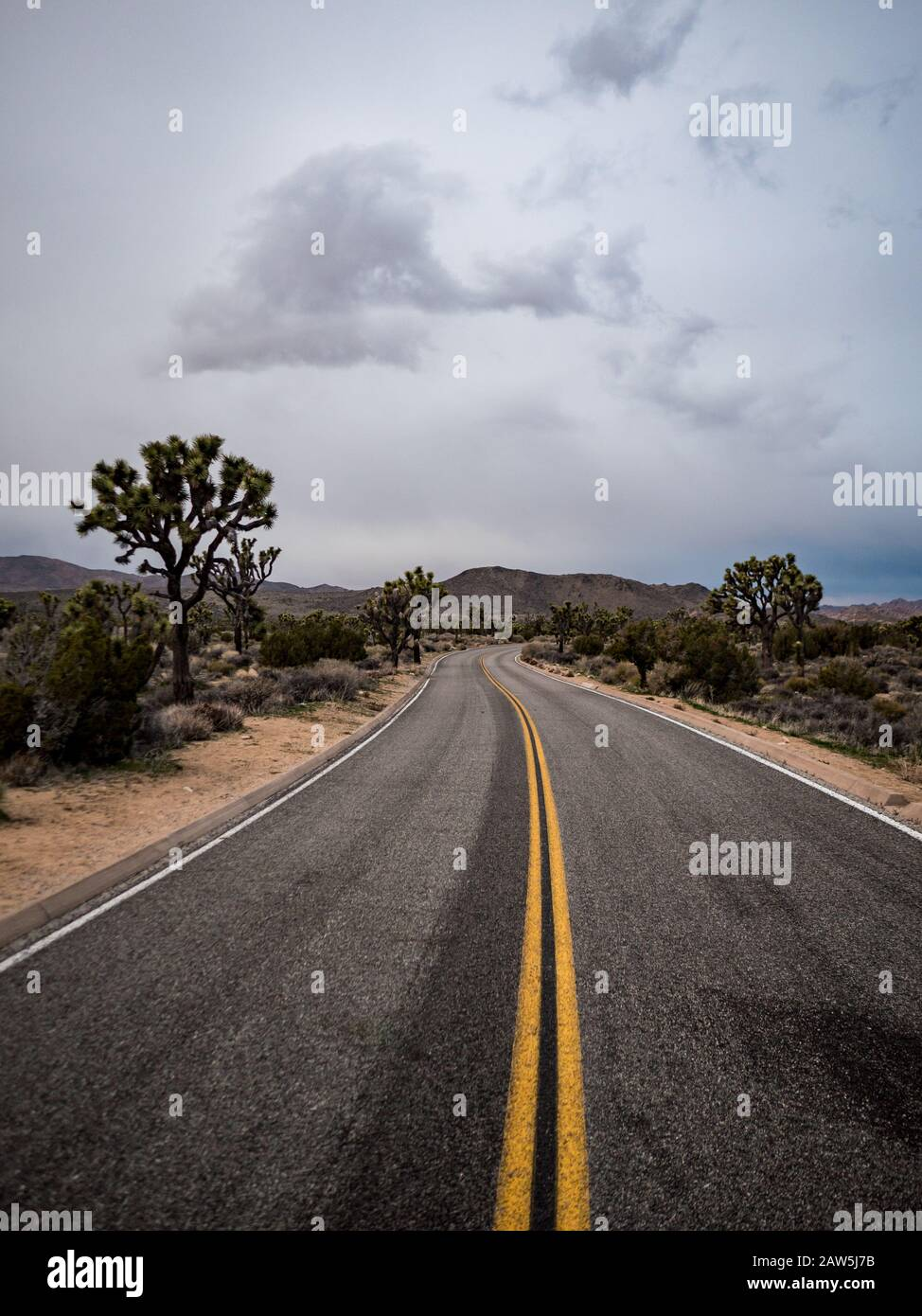 Road winding through Joshua Tree National Park under gray skies Stock Photo