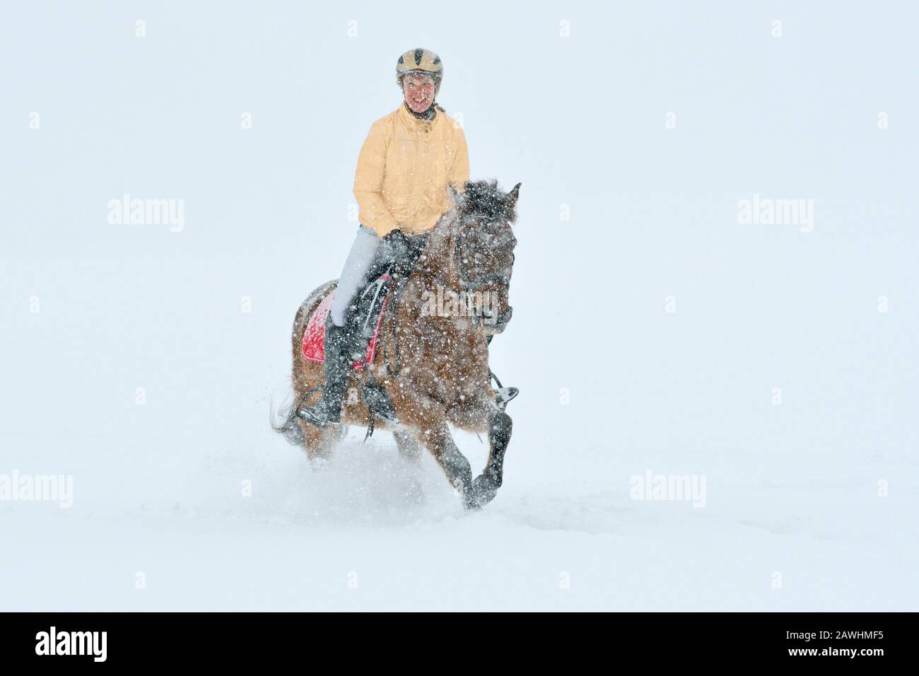 Riding out in winter during heavy snowfall, christmas colors gold red silber Stock Photo