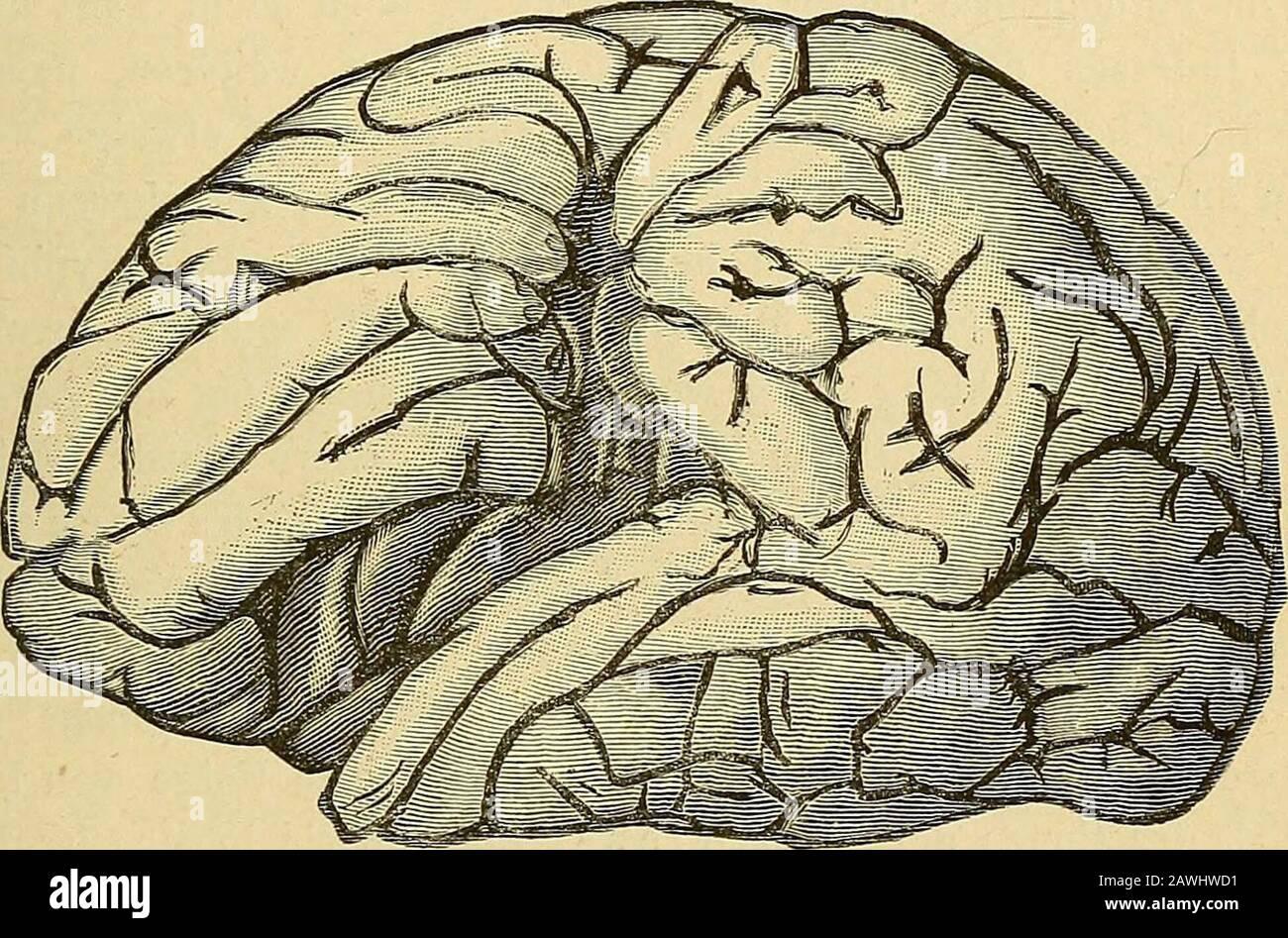Neurosen Neurosen