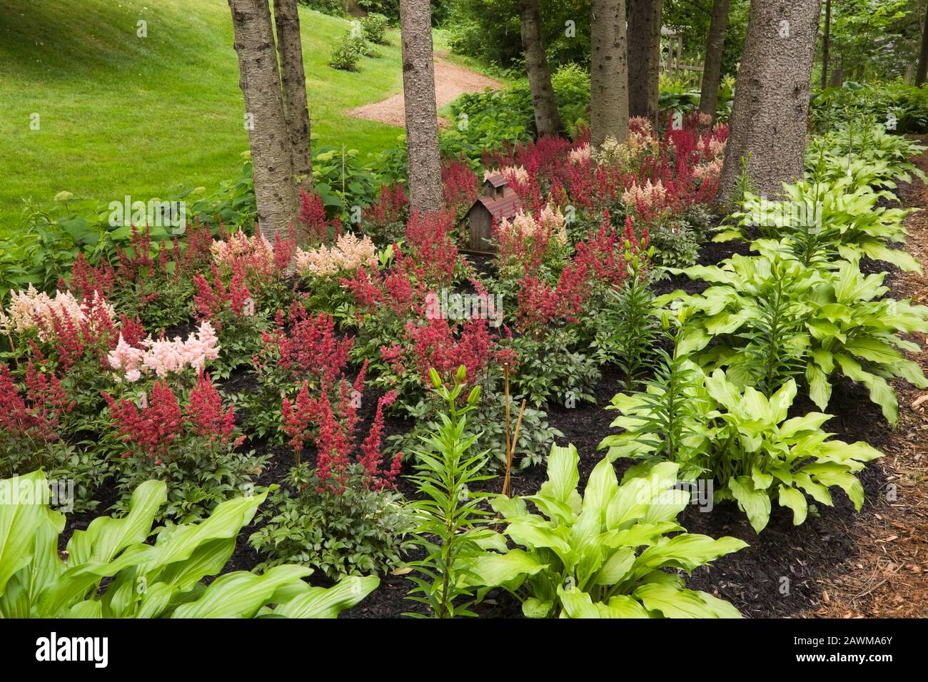 Red Astilbes High Resolution Stock Photography And Images Alamy