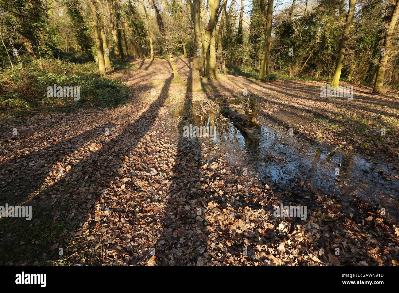Woodland Stock Photo