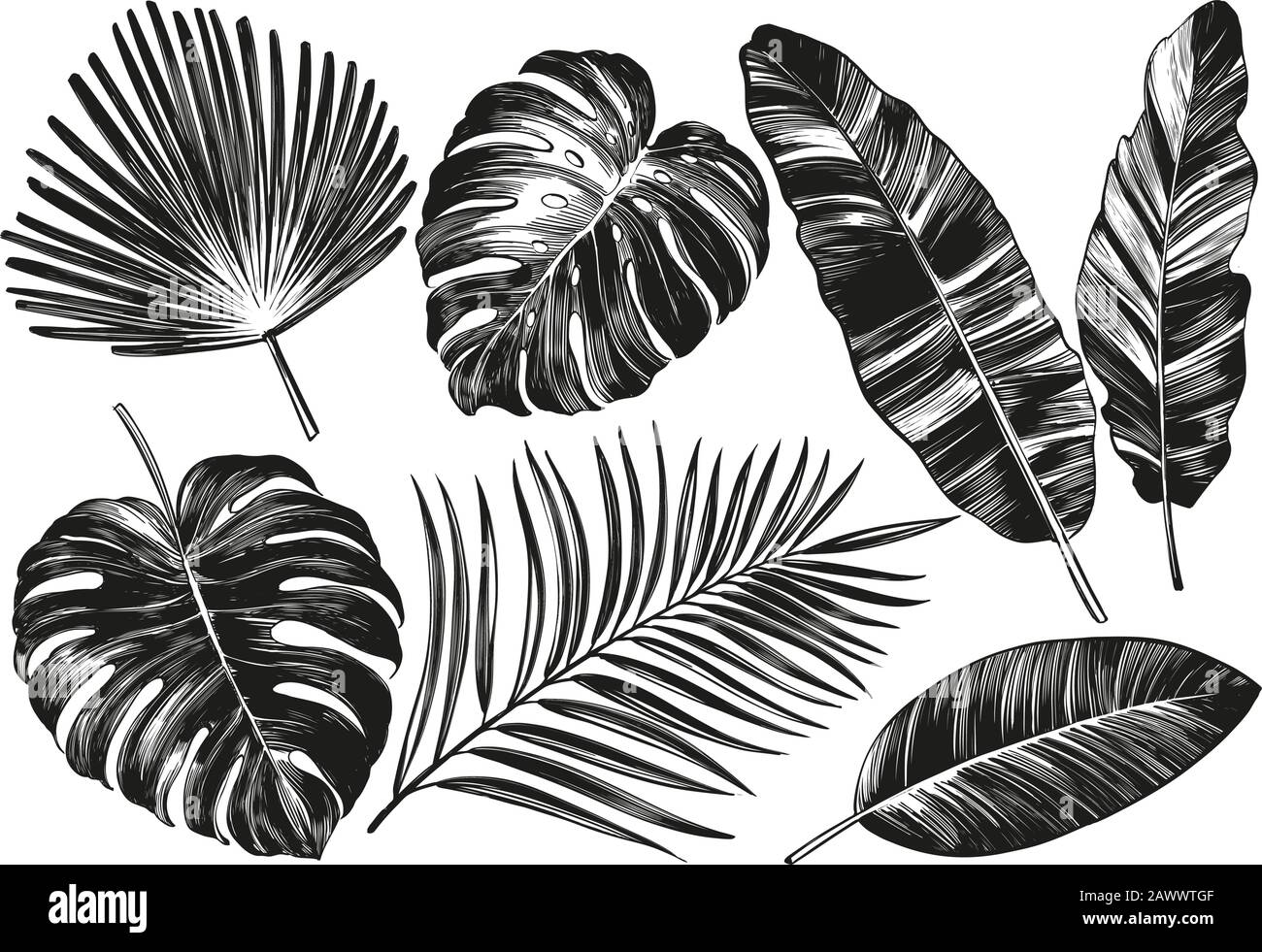 Tropical Leaves Jungle Botanical Floral Elements Palm Leaves Hand Drawn Vector Illustration Realistic Sketch Isolated On White Background Stock Vector Image Art Alamy Download tropical leaves images and photos. https www alamy com tropical leaves jungle botanical floral elements palm leaves hand drawn vector illustration realistic sketch isolated on white background image342931471 html
